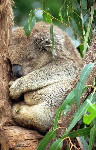 koalab ren die experten f r gesunden schlaf traumsofas. Black Bedroom Furniture Sets. Home Design Ideas